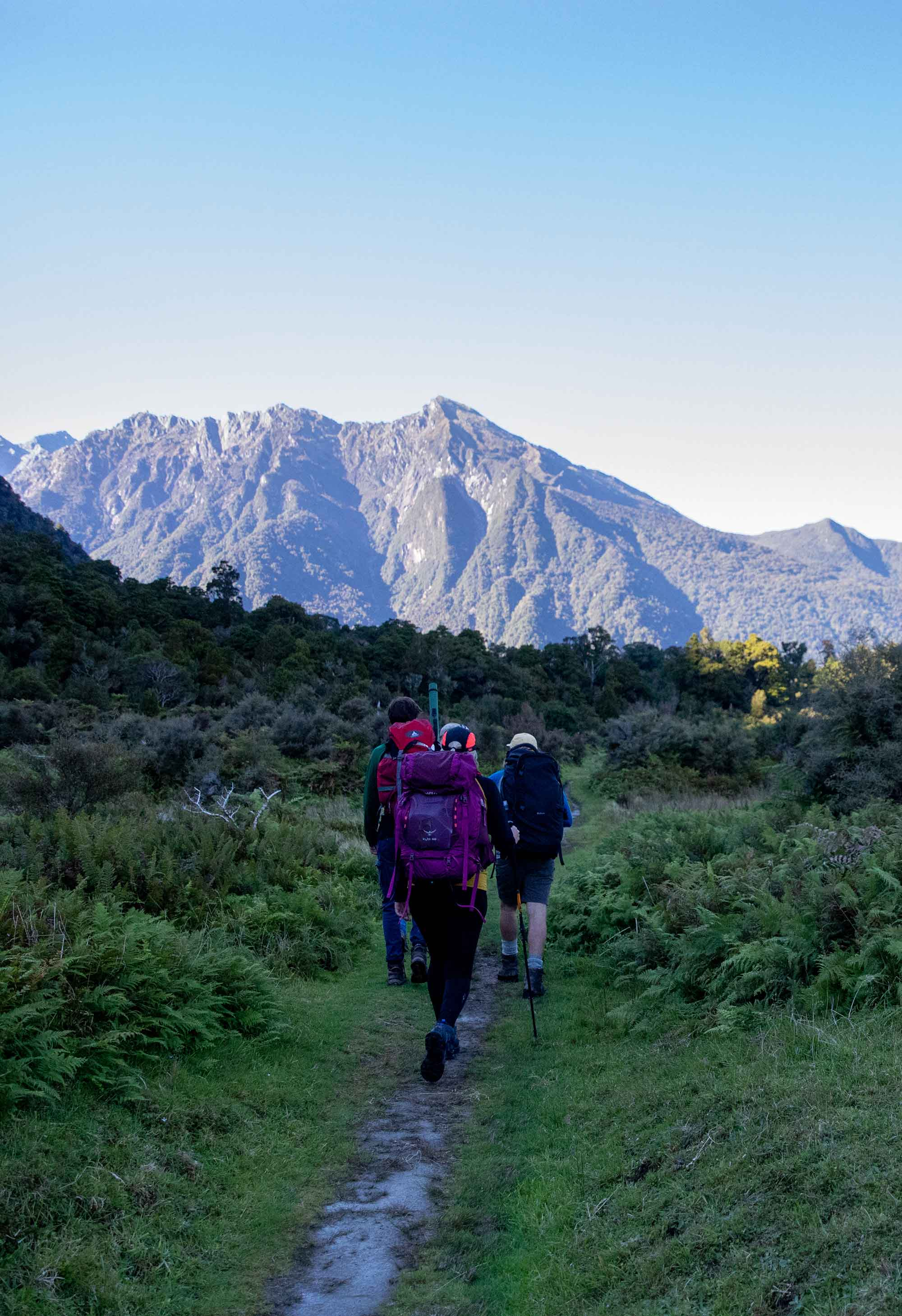 Hikers on the Copland Track in New Zealand